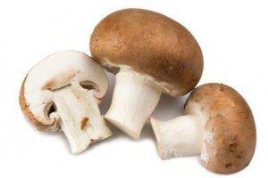 Organic brown mushroom 500 gr. Region Gran Canaria
